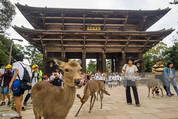 Deer outside Tōdai-ji Temple in Nara
