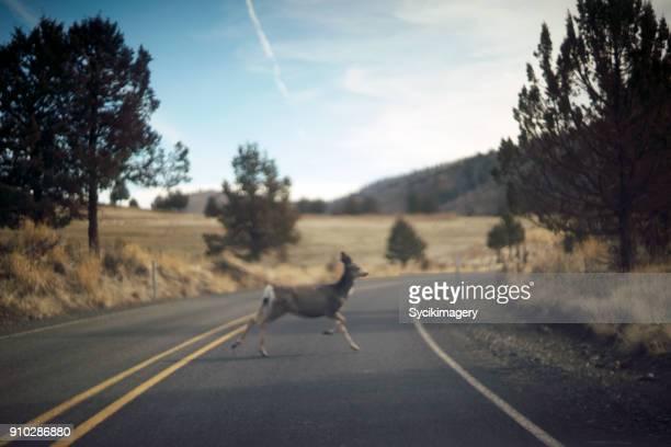 Deer running across road