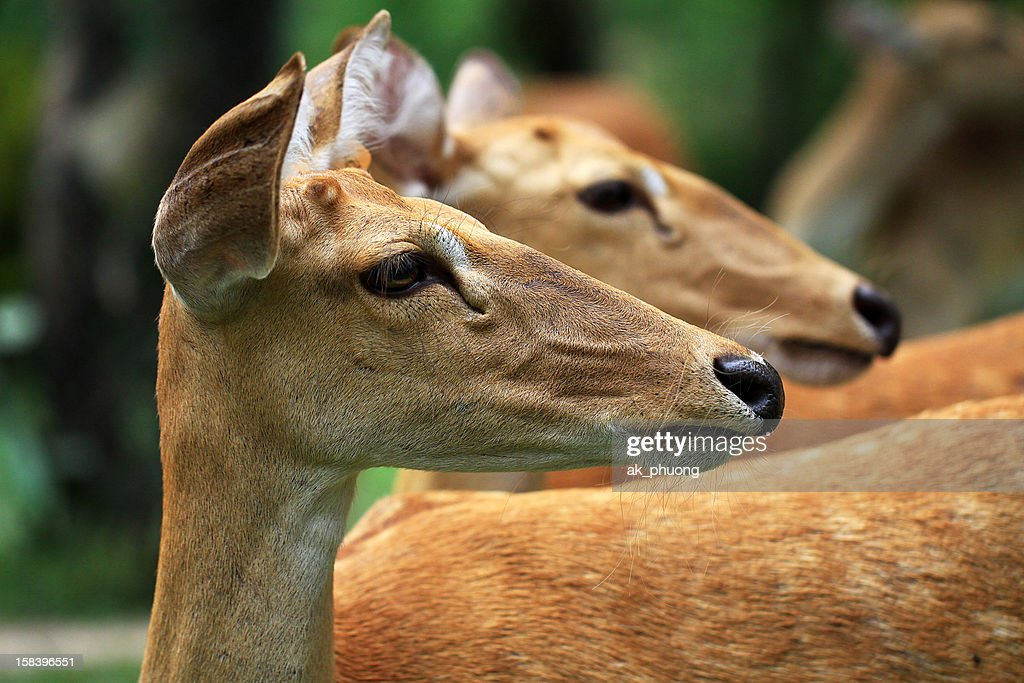 2 deer same the direction : Stock Photo