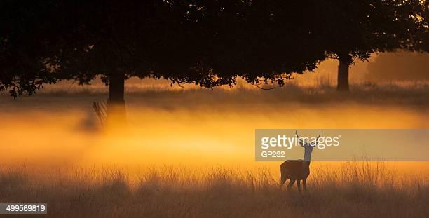 Deer pittoresque