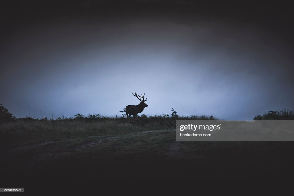 Deer Silhouette on Hillside : Stock Photo
