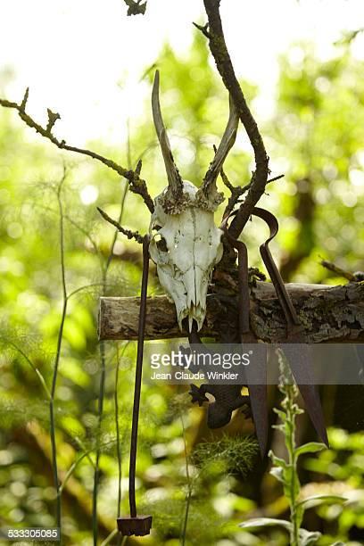 Deer skull as garden decoration in garden
