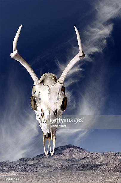 Deer Skull floating against mountain scene
