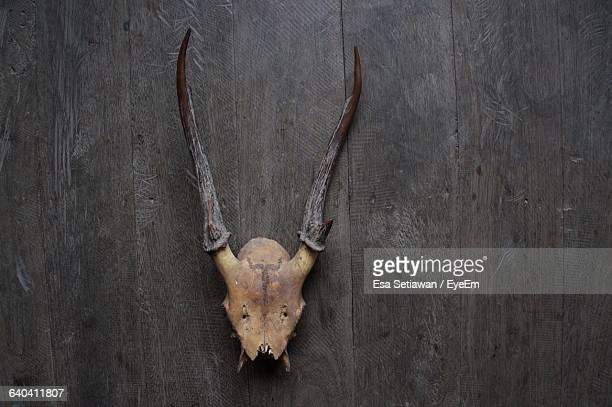 Deer Skull Mounted On Wooden Wall