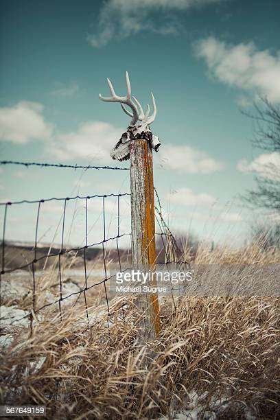 Deer skull on fence post in field.