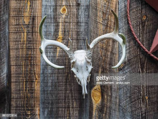deer skull - andy clement stock photos and pictures