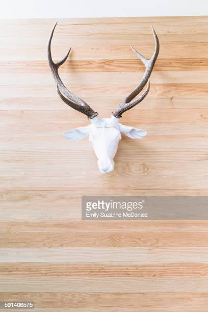 Deer skull with antlers hanging on wall