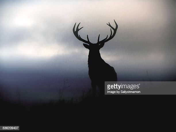 Deer Stag Silhouette in Misty Blue