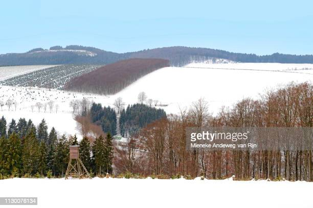 Deer stand in a snow-coverd landscape in the Sauerland, Germany