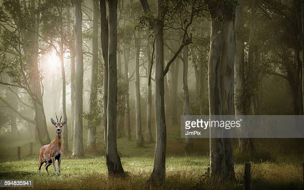 Deer standing in forest, Paris, France