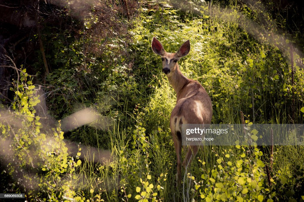 Deer standing in the bushes. : Stock Photo