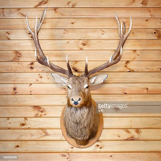 deer trophy (xxl) - dead deer stock photos and pictures