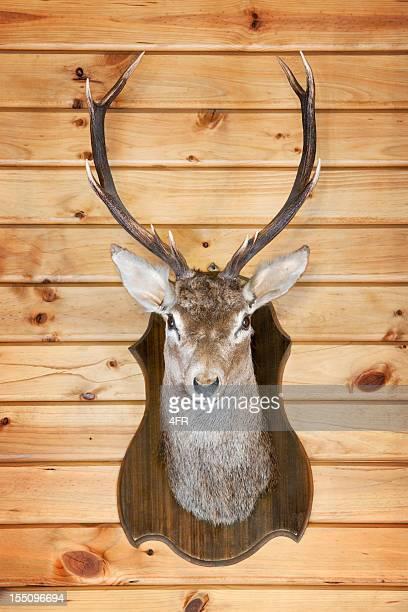 Deer Trophy (XXXL