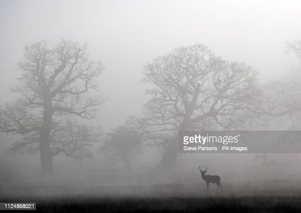 Deer walk in the frost and fog in Windsor Great Park Berkshire