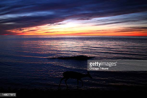 Deer walks along the edge of Lake Superior at the Porcupine Mountains Wilderness State Park, July 13, 2011.
