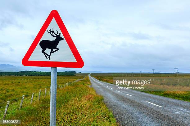 deer warning sign. isle of lewis. scotland - roadkill stock photos and pictures