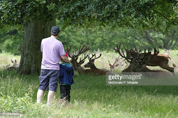 Deer watching in Richmond Park, London