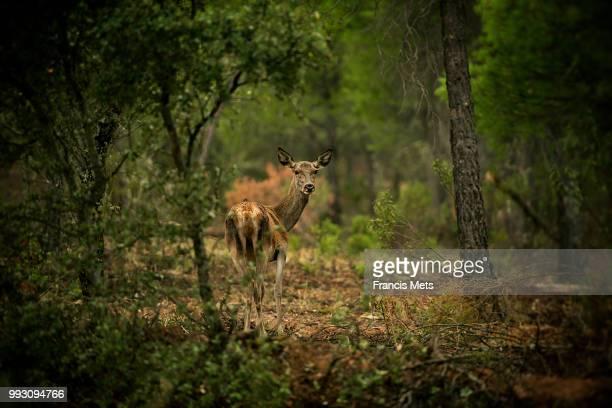 Deerspotting