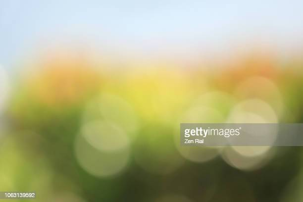 defocused image of a tropical bush with blue sky in the background - soft focus stock pictures, royalty-free photos & images