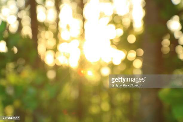 defocused image of illuminated tree - focus on foreground stock pictures, royalty-free photos & images