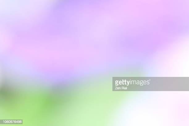 Defocused image of  lavender colored flowers and green leaves creating a soft abstract design