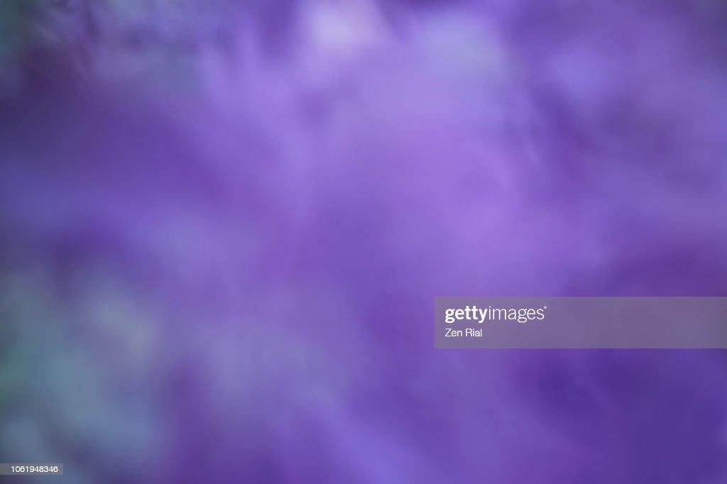 Defocused image of purple flowers : Foto de stock