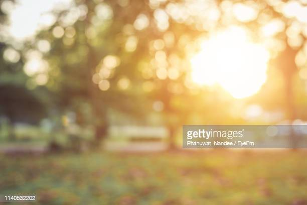 defocused image of sun shining through trees in park during sunset - デフォーカス ストックフォトと画像