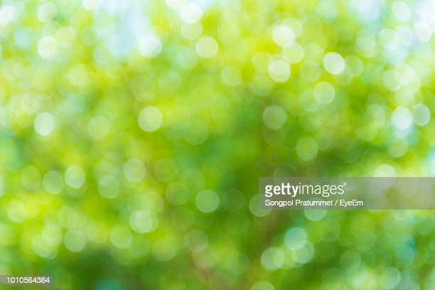 defocused image of tree - green color stock pictures, royalty-free photos & images