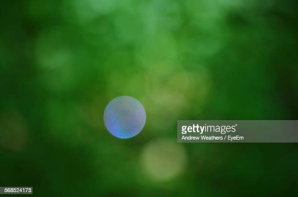 Defocused Image Of Tree