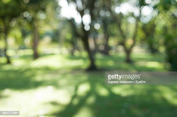 Defocused Image Of Trees Growing On Field