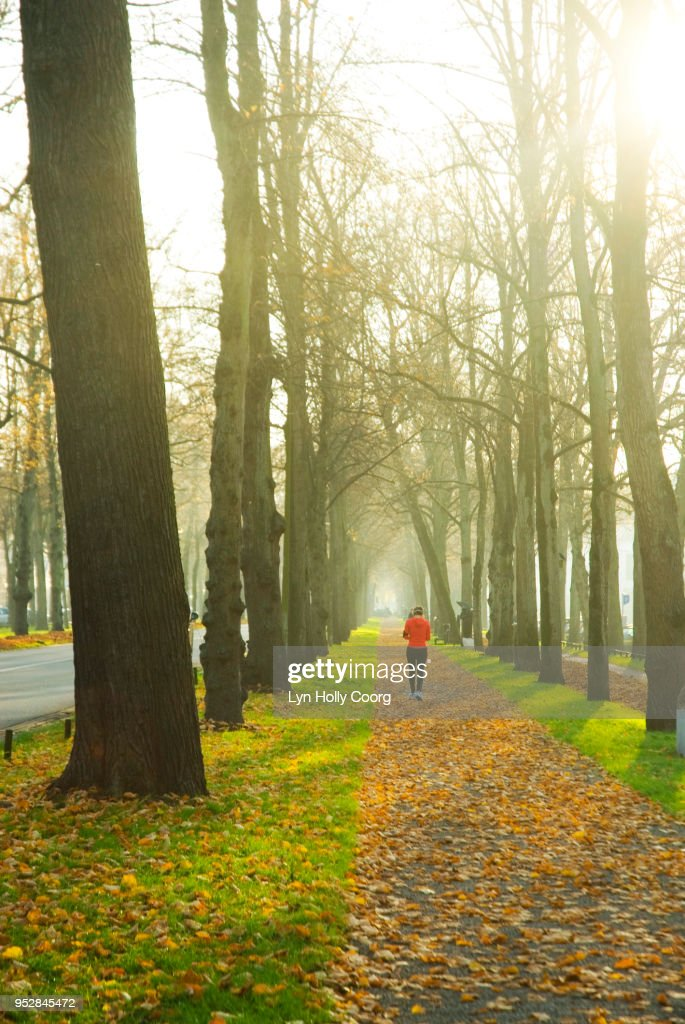 Defocused single female jogger in woods at Golden hour : Stock Photo
