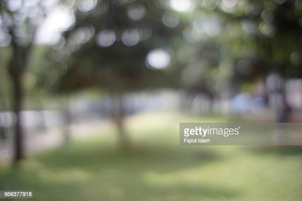 defocused trees at park - unscharf gestellt stock-fotos und bilder