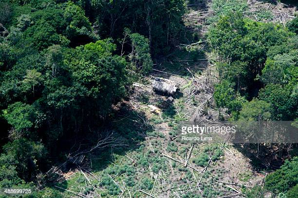 Deforestation Amazon rainforest