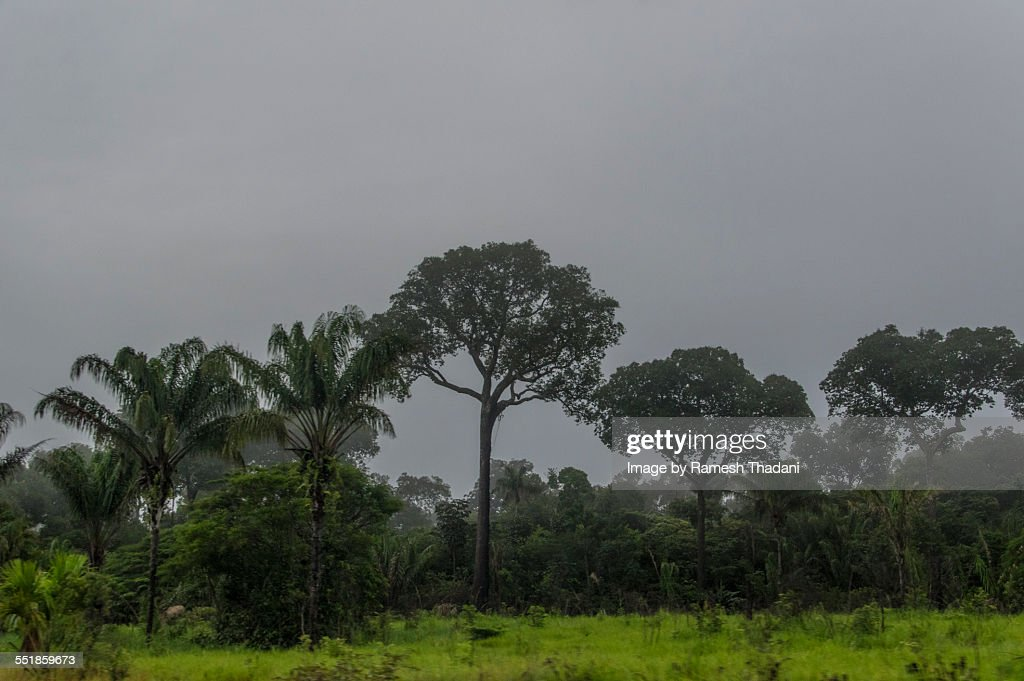 Deforestation and Cattle Raising in the Amazon : Stock Photo