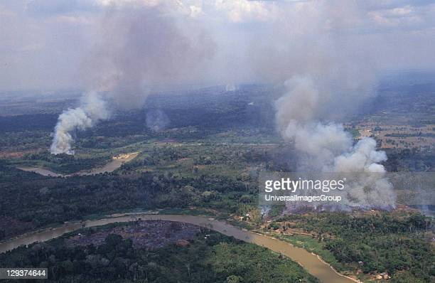 Deforestation Brazil Amazon Vicinity Rio Branco Migrant Slash And Burn Cultivators Clear Rain Forest To Grow Crops The land usually only remains...