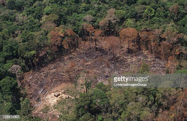 Deforestation Brazil Amazon Vicinity Rio Branco Patches Of Forest Burnt By Migrant Slash And Burn Cultivators To Clear Land To Plant Crops The Tree...