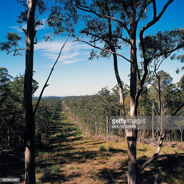 Deforestation Cowarra State Forest New South Wales Australia