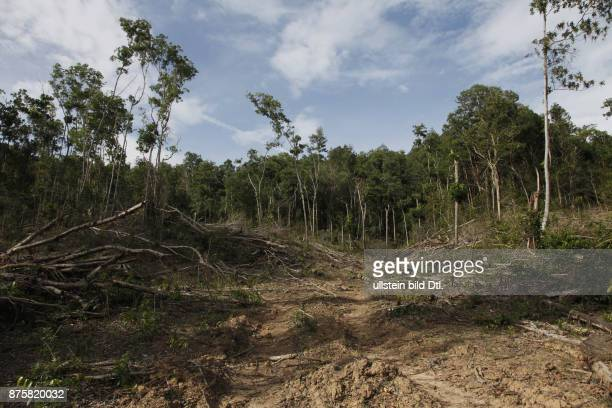 Deforestation due to logging to plant palm oil plantations in Sabah Borneo Malaysia