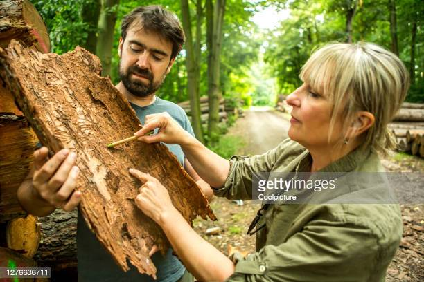 deforestation. environmentalist giving a lecture about bark beetle. - ecologist stock pictures, royalty-free photos & images