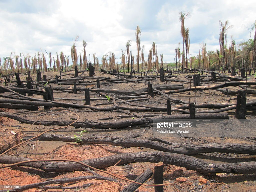 Deforestation in Amazon : Stock Photo