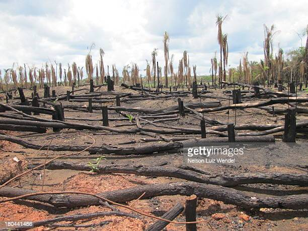 deforestation in amazon - deforestation stock pictures, royalty-free photos & images