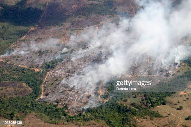 deforestation in amazon region - para state, brazil - amazon rainforest stock pictures, royalty-free photos & images