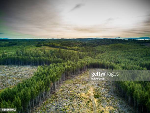 deforestation in managed woodland in washington, usa - deforestation stock pictures, royalty-free photos & images
