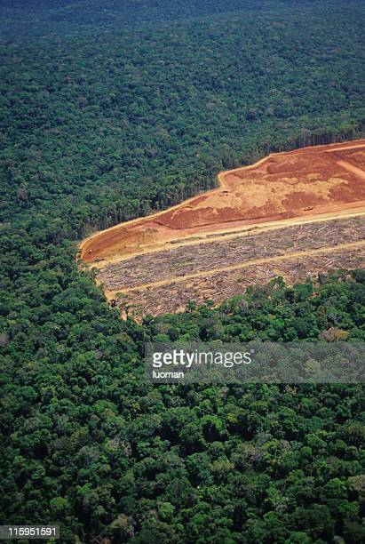 deforestation in the amazon - vernieling stockfoto's en -beelden