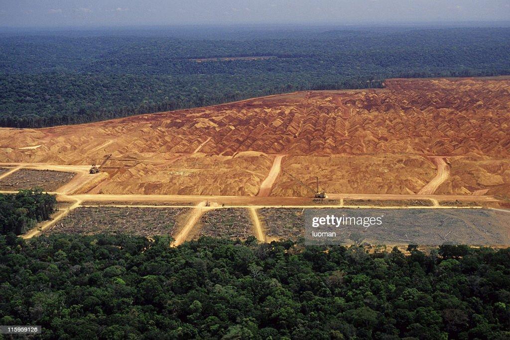 Desflorestação da Amazon : Foto de stock