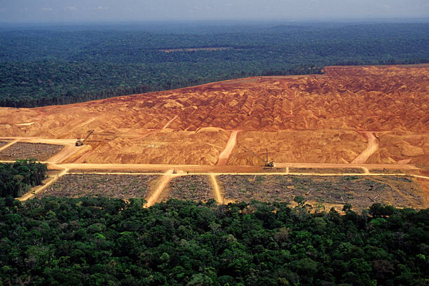 a report on the destruction of our rainforest