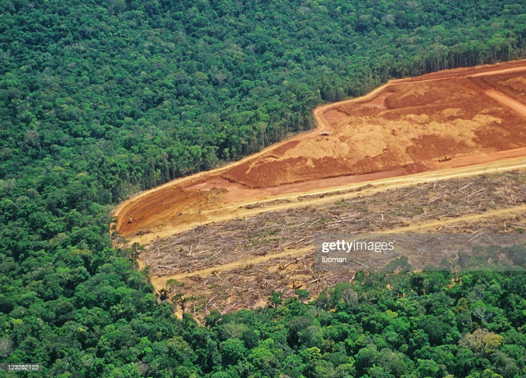 Deforestation in the Amazon : Stock Photo