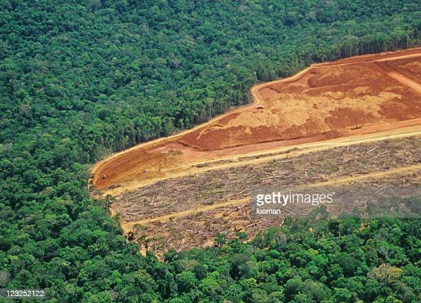 deforestation in the amazon - brazil stock pictures, royalty-free photos & images