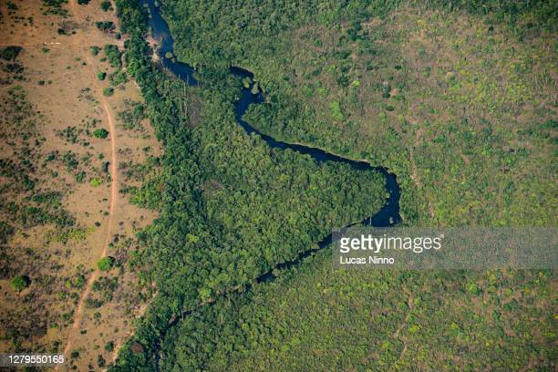 deforestation in the amazon - destruction stock pictures, royalty-free photos & images