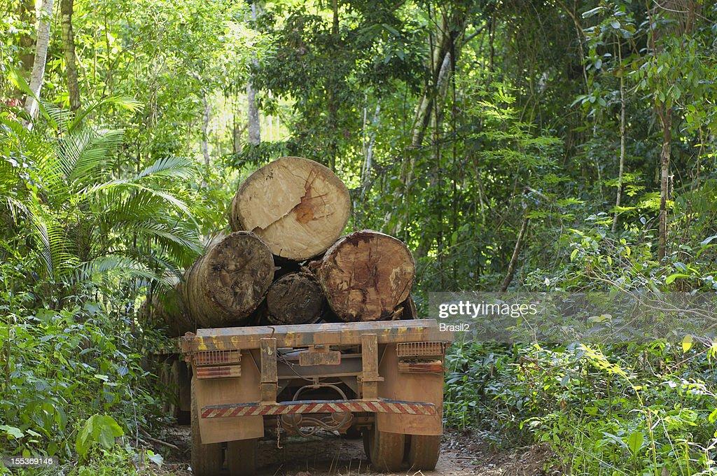 Deforestation in the  amazon rainforest : Stock Photo